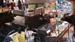 Αγελάδες εισβάλλουν σε σούπερ μάρκετ και τρώνε τα