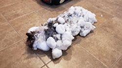 Το θαύμα της σωτηρίας της γάτας Φλάφι: Την βρήκαν κατεψυγμένη και