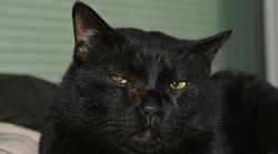 10月27日は「黒猫の日」。黒猫というすばらしく美しい生き物をお祝いする日です