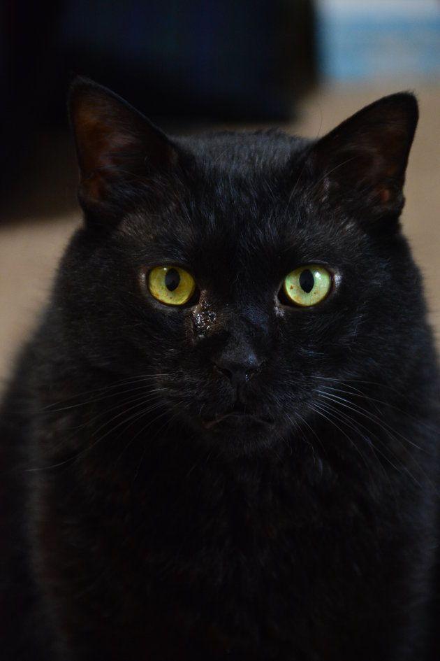 黒猫の画像 p1_22