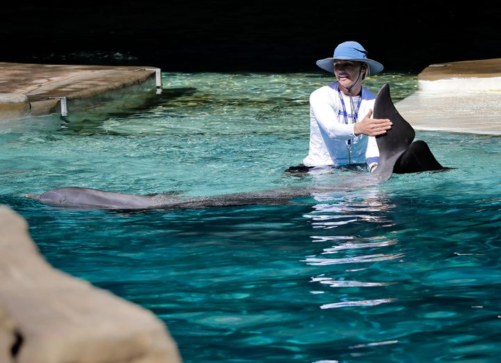 A trainer interacts with a dolphin at Dolphinaris.