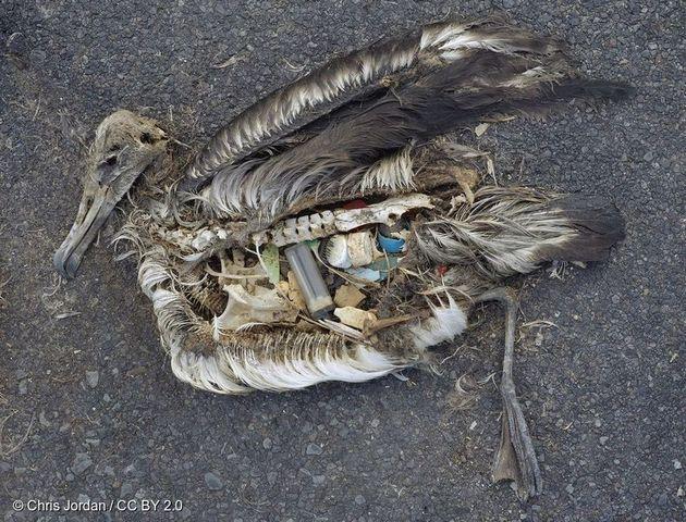 일회용 플라스틱 쓰레기가 해양 생태계를 위협하고