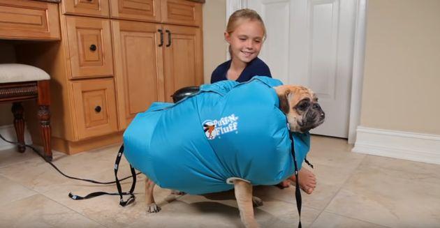 이 반려견 드라이어 자켓을 발명한 사람은 9살 소녀다(사진,