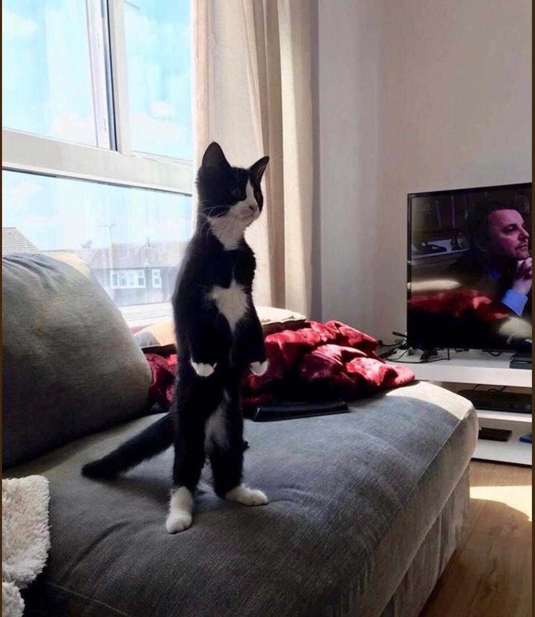 二本足で立つ猫たち(画像集)