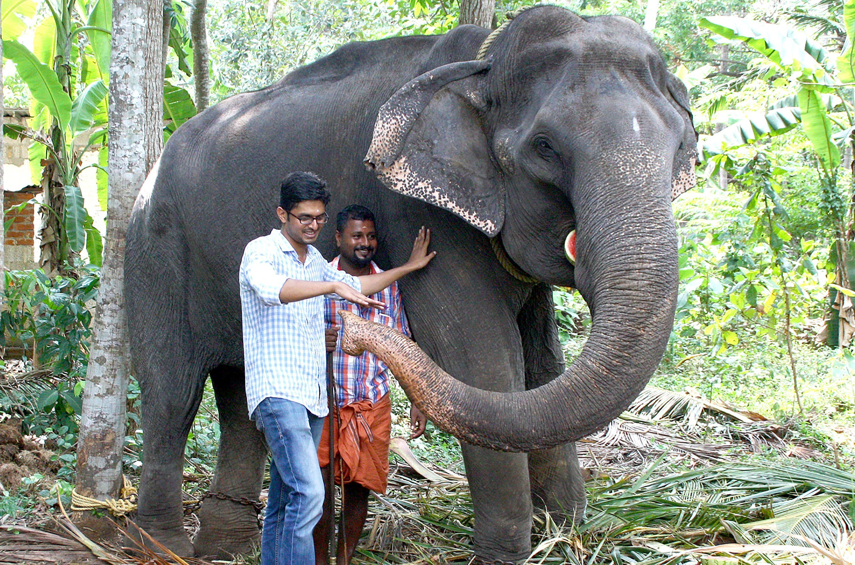 This photo taken on April 18, 2016 shows elderly Indian elephant Dakshayani, awarded the title 'Gaja Muthassi', or elephant granny, with her keeper and a visitor on the grounds of the Chengalloor Mahadeva temple in Thiruvananthapuram in India's southern Kerala state. - An elephant believed to be the oldest ever in captivity has died aged 88 in the southern Indian state of Kerala, officials said February 7, 2019. Awarded the title of 'Gaja Muthassi' (elephant granny), Dakshayani took part in temple rituals and processions for decades, but died after becoming reluctant to eat, her veterinary surgeon said. (Photo by STR / AFP)        (Photo credit should read STR/AFP/Getty Images)