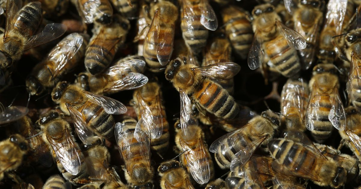 Insects Are Dying En Masse, Risking 'Catastrophic' Collapse Of Earth's Ecosystems