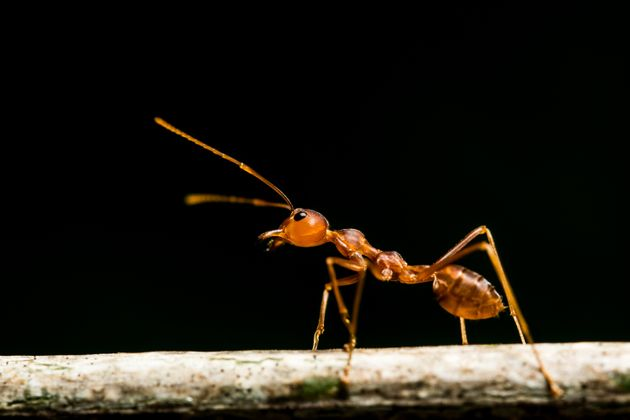 Έρευνα: Δραματικοί ρυθμοί εξαφάνισης εντόμων παγκοσμίως- τι αναμένεται να