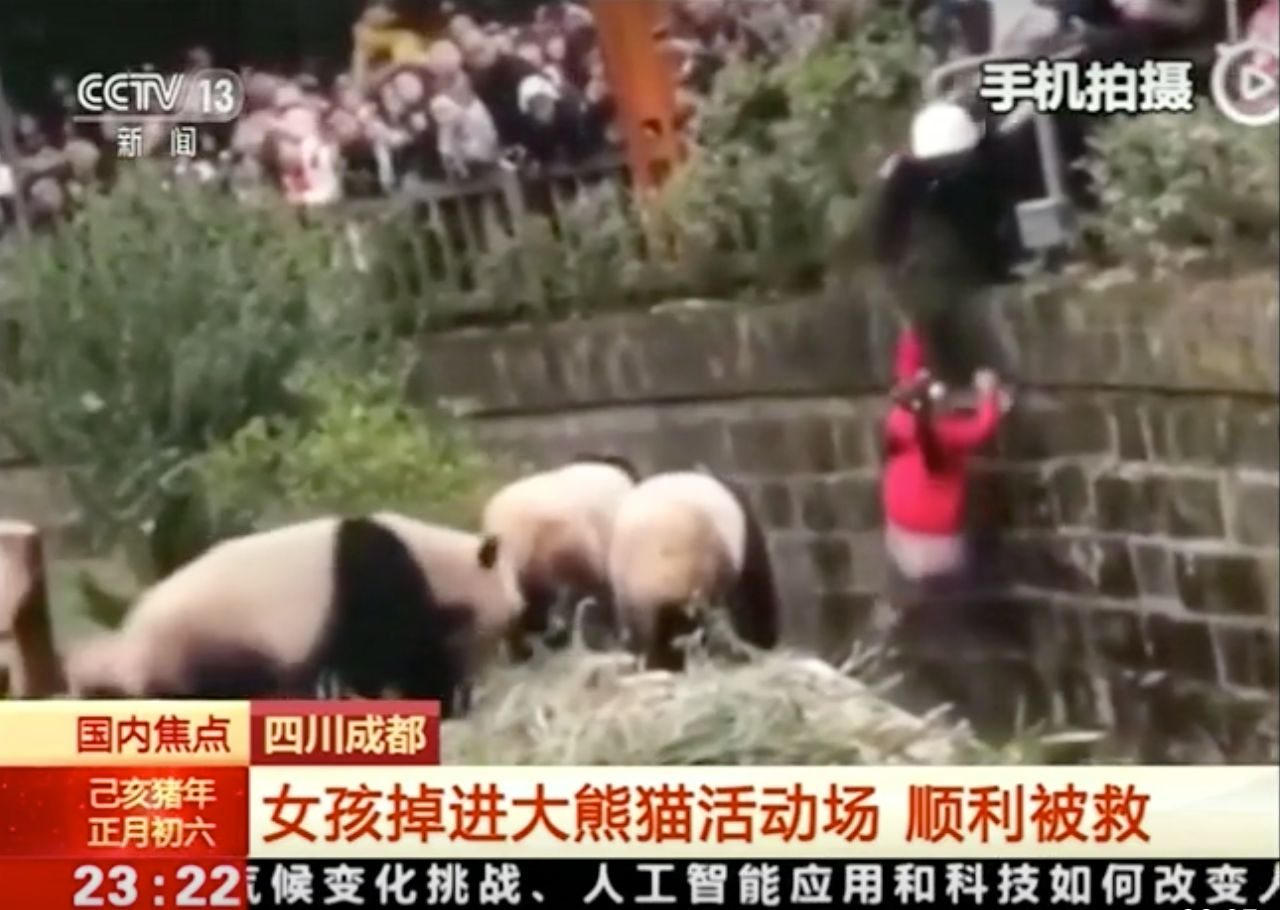 girl into panda cage