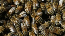 Insects Are Dying En Masse, Risking 'Catastrophic' Collapse Of Earth's
