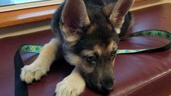 Hund leidet an lebensgefährlicher Krankheit – eine Umarmung verändert sein