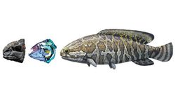 ポリプテルス類の起源を紐解く