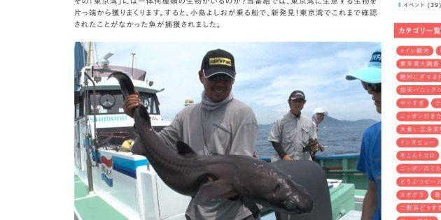 写真は「ヨロイザメ」。