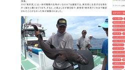 珍魚「ヒメコトヒキ」東京湾で初発見 テレ東の特番「お魚ぜんぶ獲ってみた」