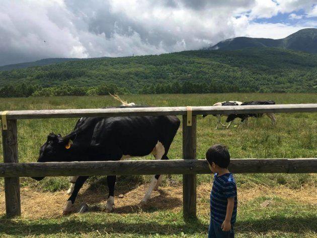 3歳の男の子は、この日初めて本物の牛や馬を見たそうです