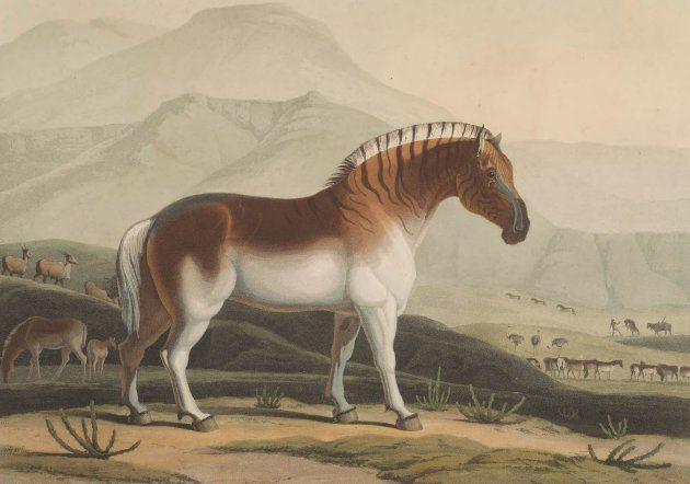 クアッガは、なぜ絶滅したのか? 図鑑から消えた動物の物語