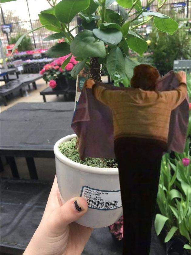 セクシーすぎる観葉植物が発見された