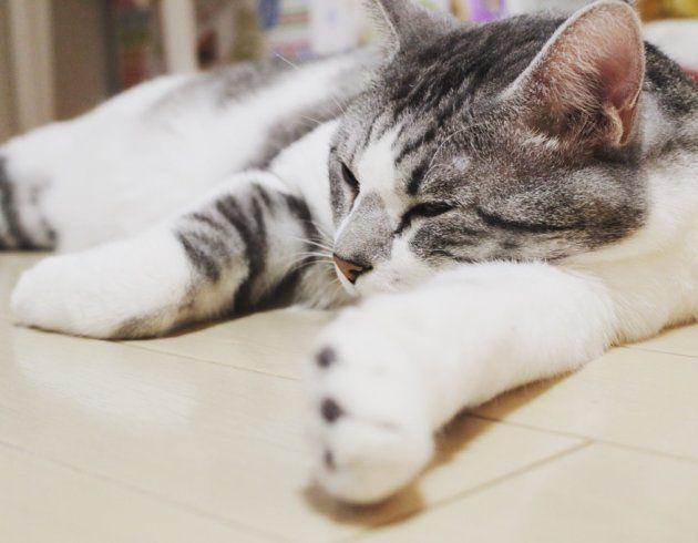 うちの福ちゃん。猫の手も借りたい。