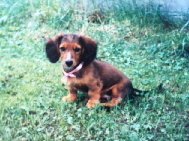 小学校1年生のときウチにやってきた愛犬ぼんは、弟のような存在だった。犬や鳥など生き物をたくさん飼っていたことが、関心の原点にあるのかもしれない。