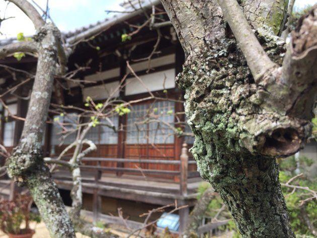 男性の実家のお寺