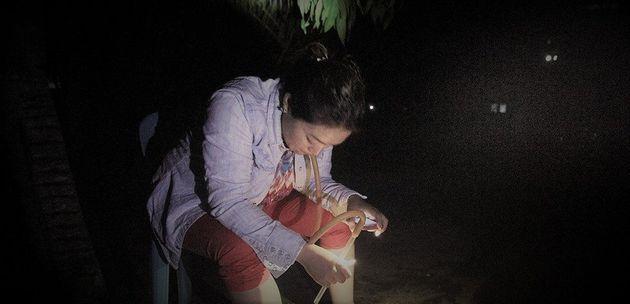 蚊と生きる。世界蚊の日に考えてみた。