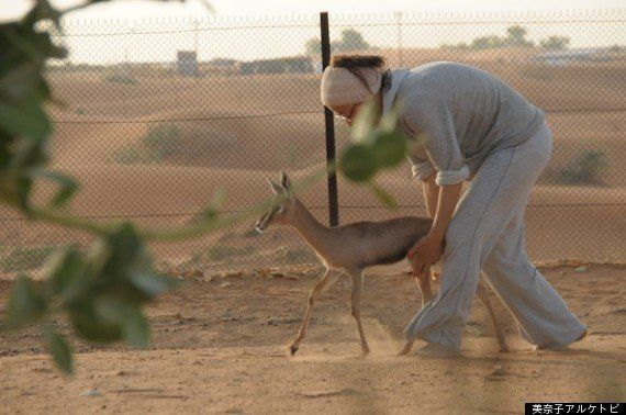 アラブの砂漠で200匹の動物たちと暮らす
