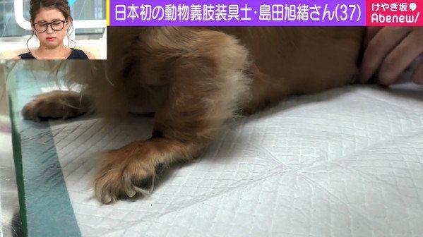 1万匹以上の装具を制作、日本初の動物義肢装具士・島田旭緒さん きっかけは義眼・指を失った祖父