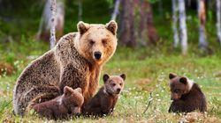 ロシア人のペットは熊?