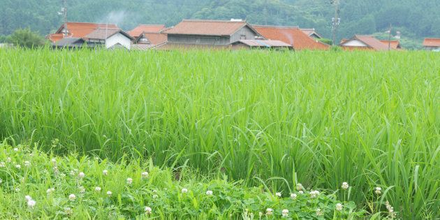 Japan, Yamaguchi Prefecture, Mine, View of rice field and private house (Photo by: JTB Photo/UIG via...