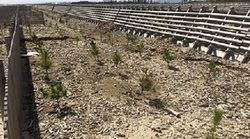 人口減少時代の海岸林 土佐清水市大岐海岸