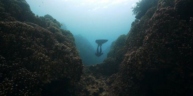 沖縄・辺野古の豊かな自然、北アイルランド出身の監督が描く 映画「ZAN ジュゴンが姿を見せるとき」、横浜で公開