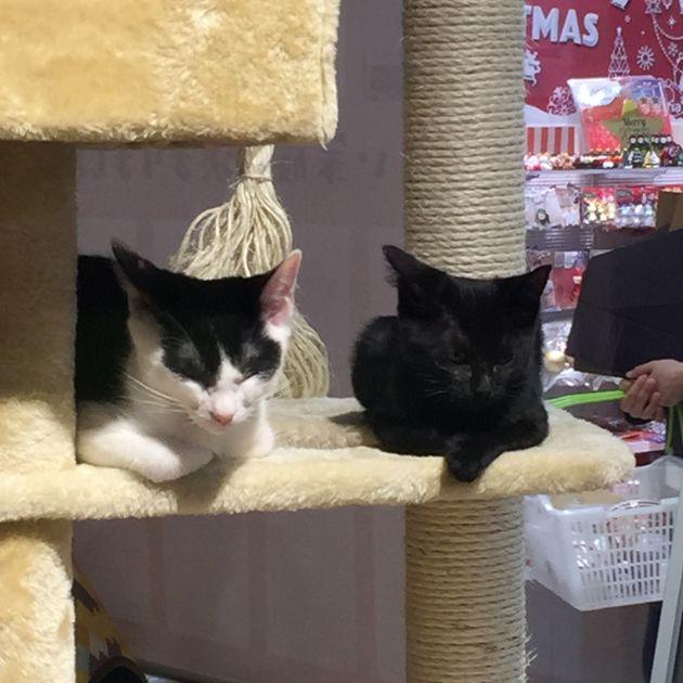 世界猫の日に向き合いたい ~保護猫ゆずちゃんの運命を決めた取り組み~