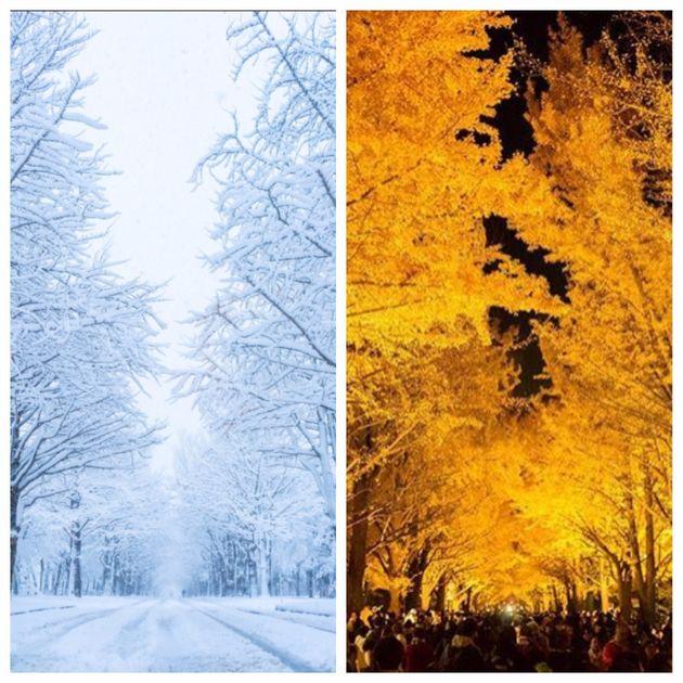 かなざわさんが撮影した雪のイチョウ並木(左)。ほんの3週間前、同じ場所でかなざわさんが撮影した紅葉のライトアップ(右)