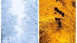 北海道大を彩った雪化粧が美しすぎる Twitter写真に元道民すら「帰りたくなる><」