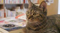 店員が「猫」の本屋さん!