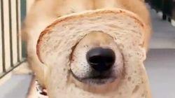 わっかを見せたら犬が鼻をスポッ!キュートすぎる動画チャレンジが話題