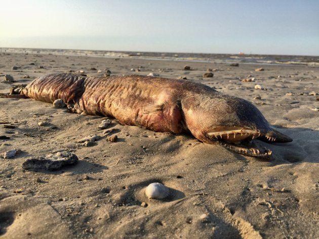 海岸で発見された謎の生物