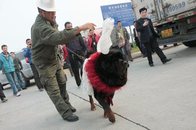 280万元(当時約5000万円)の値段がついたチベット犬(2010年11月)