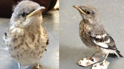 小鳥を救ったのはキュートな「ぞうり」だった(画像)