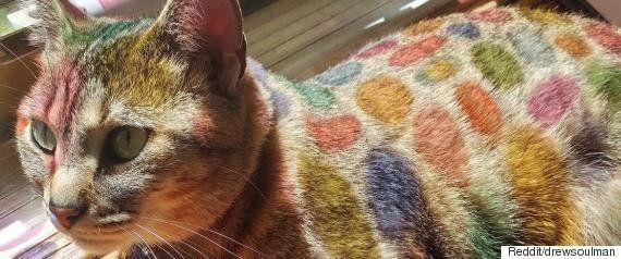 オッドアイの双子の猫 左右で色が違う神秘的な瞳、世界を魅了(画像集)