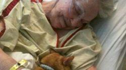 さよならを伝えたい。病床のおばあちゃんが親友の猫と再会