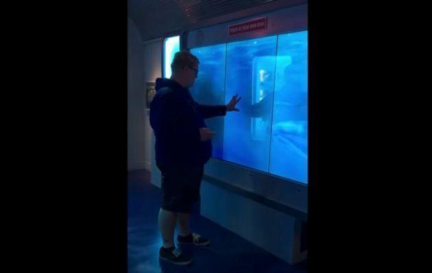 """""""サメ""""を見ていた男性が吹っ飛んだ。どういうこと?(動画)"""