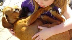 引き取った子犬に、優しく子守唄を歌う少女。とっても癒される(動画)