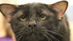 4つ耳の黒猫ちゃん「バットマン」が、家族と出会うまで(画像・動画)