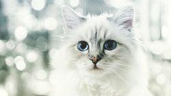 年収およそ4億円 セレブ猫の華麗なる生活