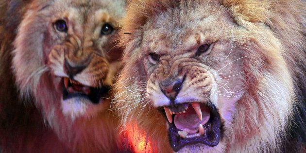 サーカスでの動物出演はノー イタリアで禁止法が成立