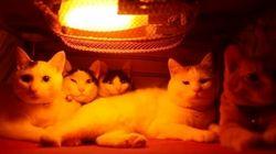 猫たちはコタツの中でこう過ごしている(動画)