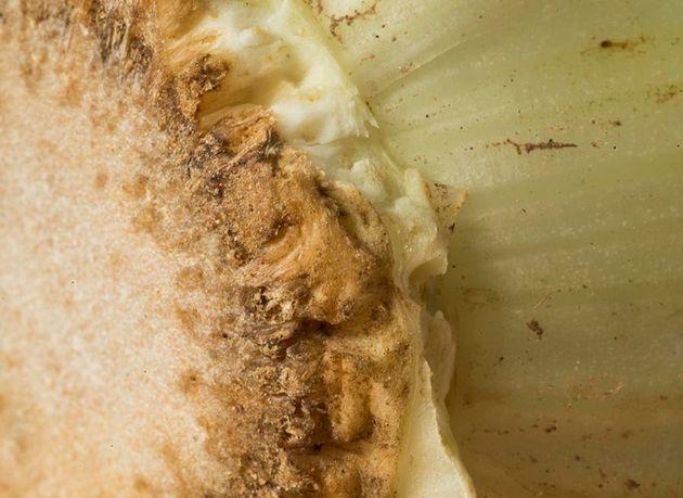 キッチンによくある食べ物の超ドアップ写真、何だか分かる?