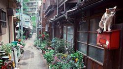 東京の街で、のーびのび暮らす猫たち【画像】
