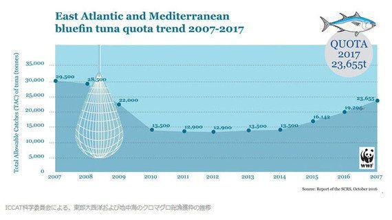大西洋クロマグロの大幅な漁獲枠引き上げに警告