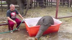 ゾウの赤ちゃん、水遊びしようとして「あ、コローン」【動画】
